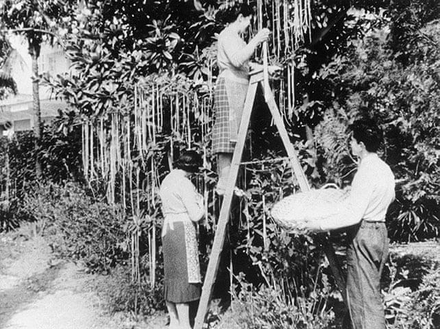 Harvesting-from-the-Spaghetti-Tree